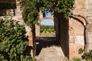 Vineyards Abbadia Ardenga estate