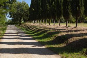 Road running through Abbadia Ardenga